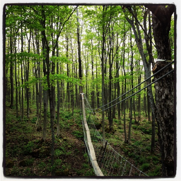 """This is a view of a dead canopy """"trail"""" after we had finished the canopy walk.  Taken while standing on a canopy base build around a massive tree trunk about 70 feet.  I loved the zip line down."""